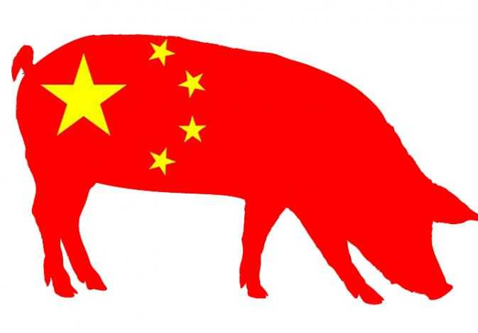 Kinas svineproduktion i kraftig vækst!