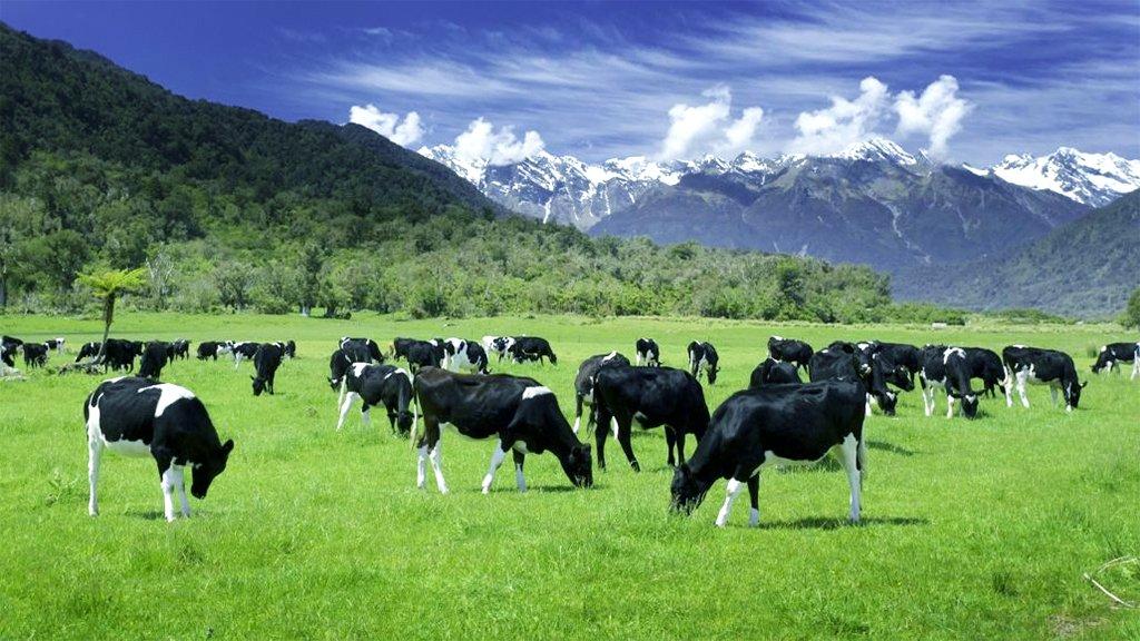 Faldende mælkepriser i 2021